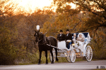 Ava K's Horse-Drawn Carriage Service